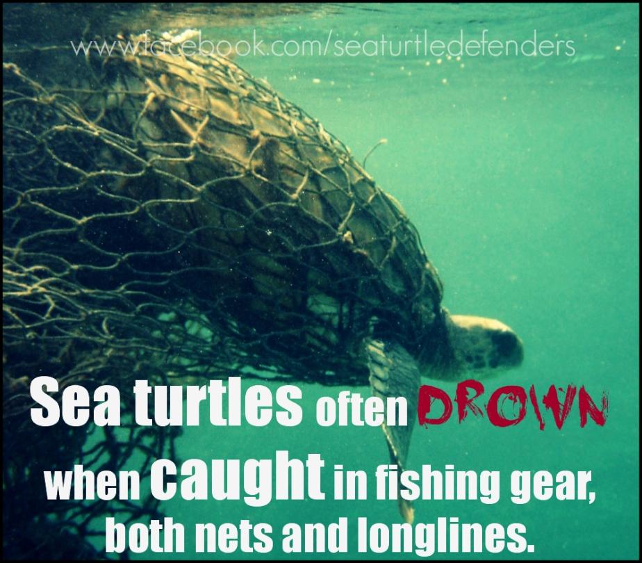 defend sea turtles