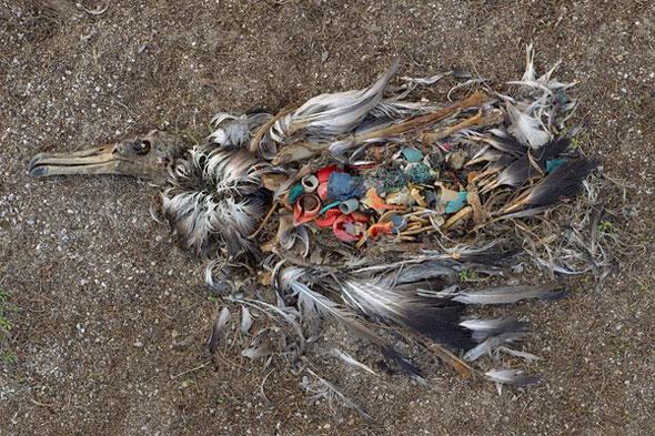 plastic pollution kills bird