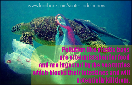 plastics and sea turtles